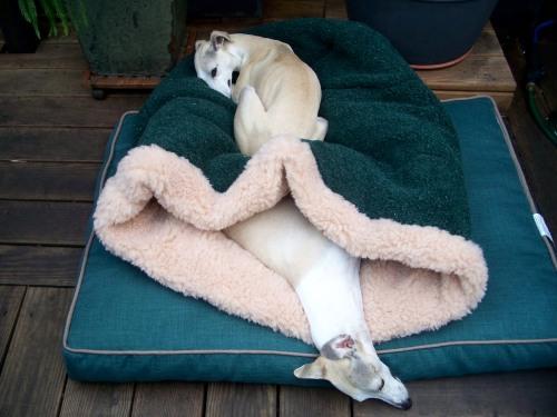 New sleeping arrangement